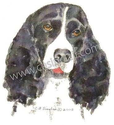 Black English Springer Spaniel