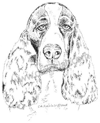 childrens coloring pages springer spaniel | Black and White English Springer Spaniel | Dog Portraits ...